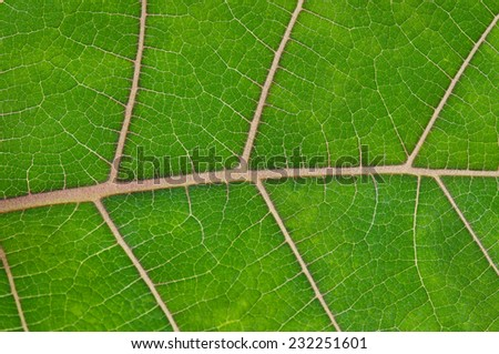 Texture of bright green leaf close-up - stock photo