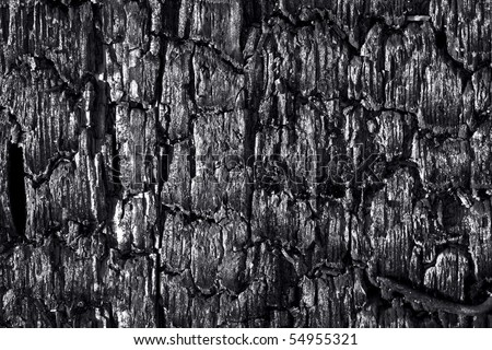 texture of charry tree - stock photo
