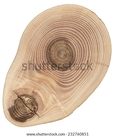 Texture of cut tree - stock photo
