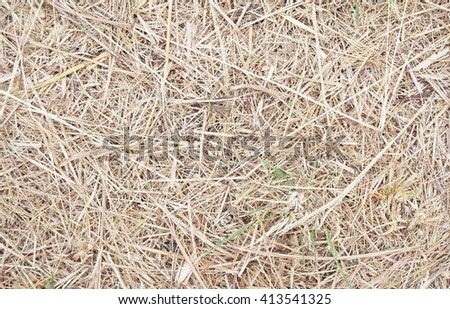 texture of dried hay. - stock photo