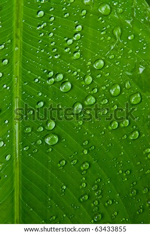 texture of droplets on green leaf - stock photo