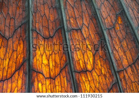 texture of dry leaf - stock photo