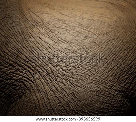 texture of elephant skin. - stock photo