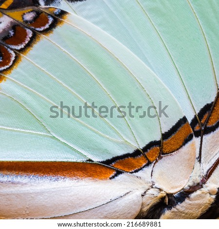 Texture of Emerald Nawab or Indian Yellow Nawab (Polyura jalysus) butterfly's wing, for background - stock photo