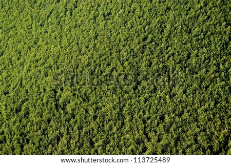 Texture of forest - stock photo