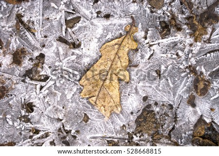 Texture of frozen oak leaf in puddle
