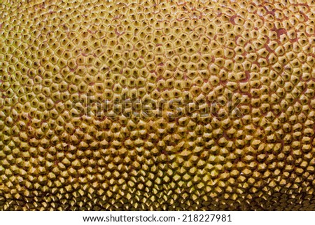 Texture of  fruit's outer skin