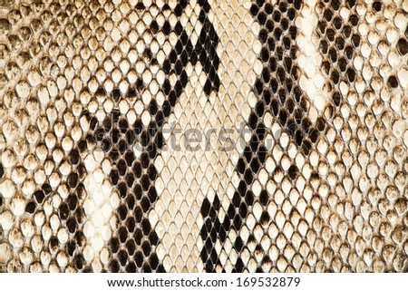 Texture of genuine snakeskin. Close up real leather texture