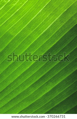 texture of green leaf background - stock photo