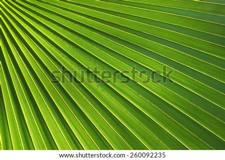 Texture of green palm leaf background. - stock photo