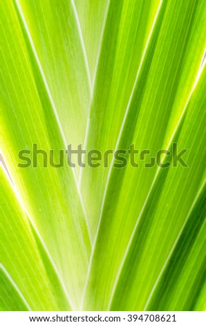texture of green palm leaf background, green leaf background abstract of nature - stock photo