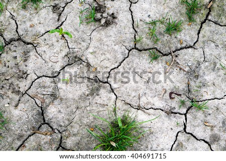 Texture of grey withered earth with cracks and green grass - stock photo