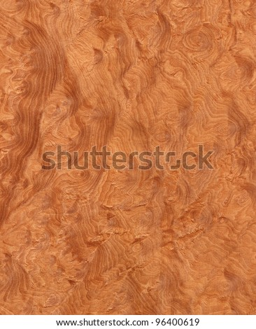 Texture of madrone's root (high-detailed wood texture series) - stock photo