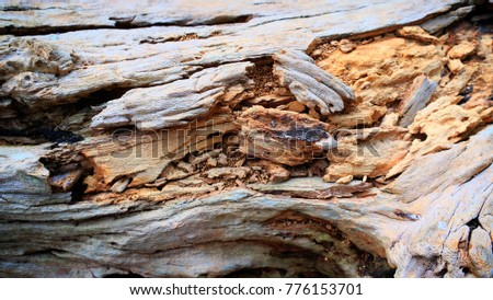 Texture of molder wood in rain forest.