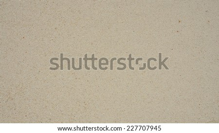 texture of nature sea shell pattern on a sand beach background - stock photo