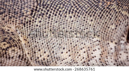 Texture of Nile monitor, Varanus niloticus, skin - stock photo