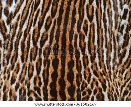texture of ocelot fur - stock photo