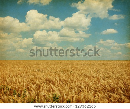 Texture of old paper. field of wheat with sunflowers - stock photo