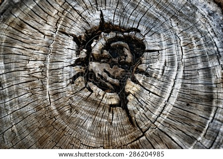 texture of old tree, close up - stock photo