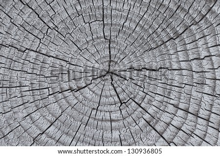Texture of old wood with annual rings. Natural texture close-up - stock photo