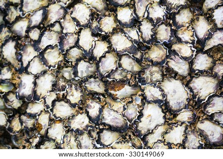 texture of oyster shells on rock - stock photo