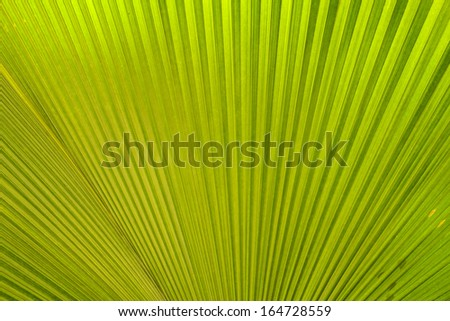 texture of Palm leaves  - stock photo