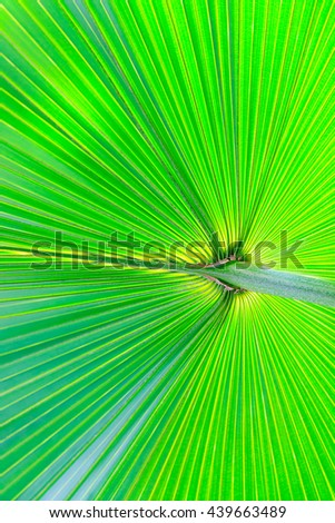 Texture of palm leaves green used background.