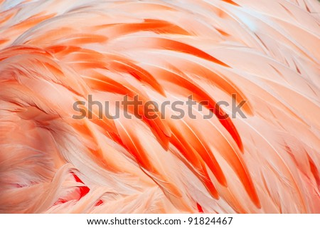 Texture of pink flamingo feathers - stock photo
