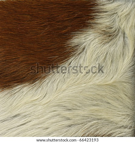 Texture of skin of cow using as background - stock photo