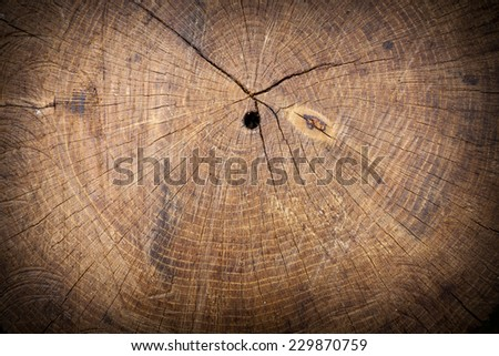 Texture of slice of wood timber. Natural background - stock photo