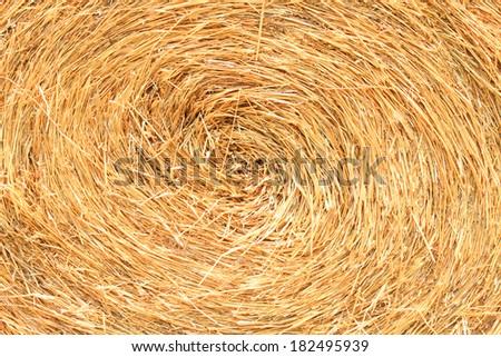 Texture of straw - stock photo