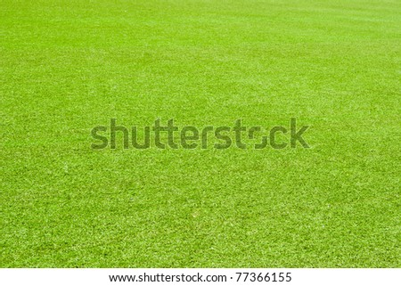 Texture of the field of green grass - stock photo