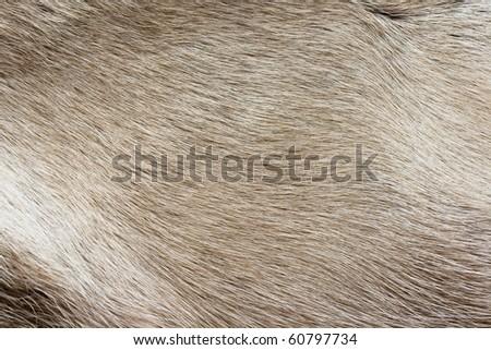 texture of the reindeer's fur closeup - stock photo