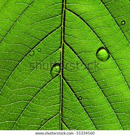 texture of the sheet tree - stock photo