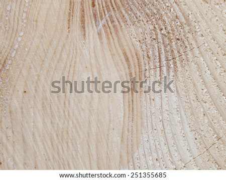Texture of the spruce tree-rings - stock photo