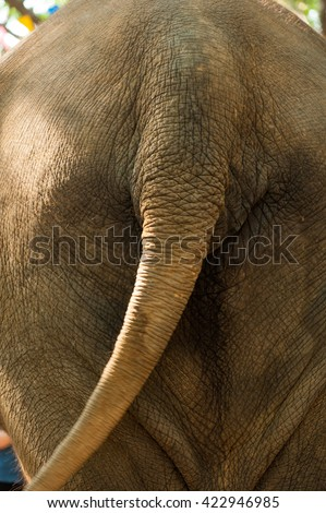 Ass crack stock images royalty free images vectors shutterstock - Elephant assis ...