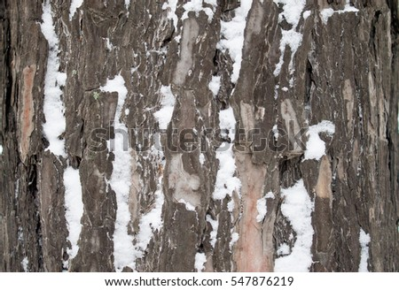 Texture of tree bark on a background. Winter Forest.