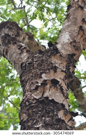 Texture of tree bark / Texture of brown tree bark - stock photo