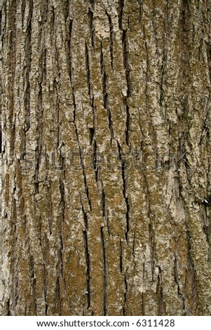Texture of tree bark, vertical format - stock photo
