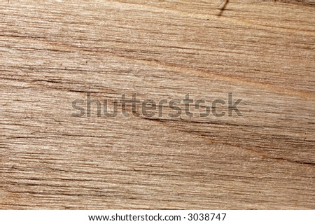 texture of tree for background
