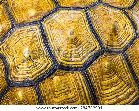 texture of turtle carapace - stock photo