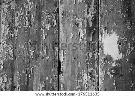 Texture of weathered wooden lining boards with peeling paint and rusty nail heads. Black and white.  - stock photo