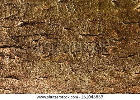 texture of wet wood - stock photo