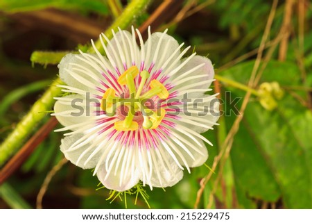 Texture of White Flower or Grass flower. - stock photo