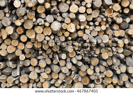 Texture of wood and branches