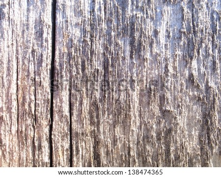 texture of wood for design
