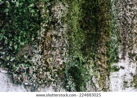 Texture old cement wall background with peeled color and moss
