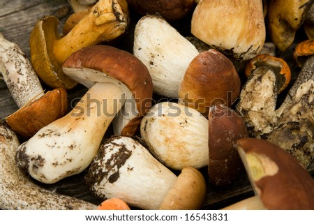 Texture their mushrooms. The reaped crop. - stock photo