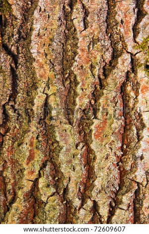 Textured background of old mossy tree bark - stock photo