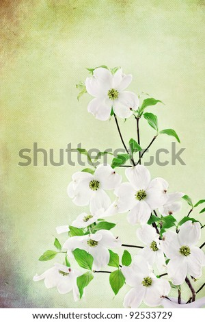 Textured image of a bouquet of white Dogwood blossoms. - stock photo